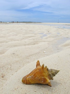 Small Conch Shell on Tahiti Beach, Hope Town