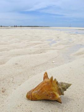 Small Conch Shell on Tahiti Beach, Hope Town