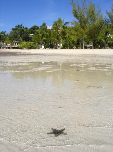 Starfish at Bluff House Beach