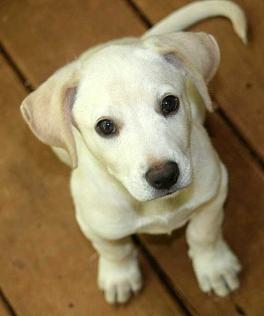 bahamas, abaco, spay, neuter, stray dog, potcake, animal rescue