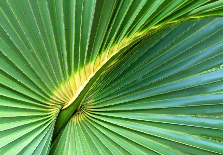 Palm frond, Green Turtle Cay Abaco Bahamas, www.littlehousebytheferry.com