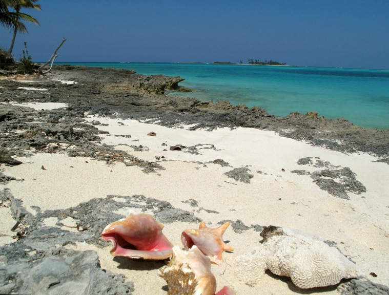 Conch Shells at Gillam Bay, Green Turtle Cay