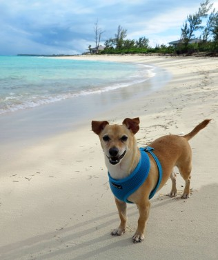 bahamas, abaco, green turtle cay, pet travel, bita bay