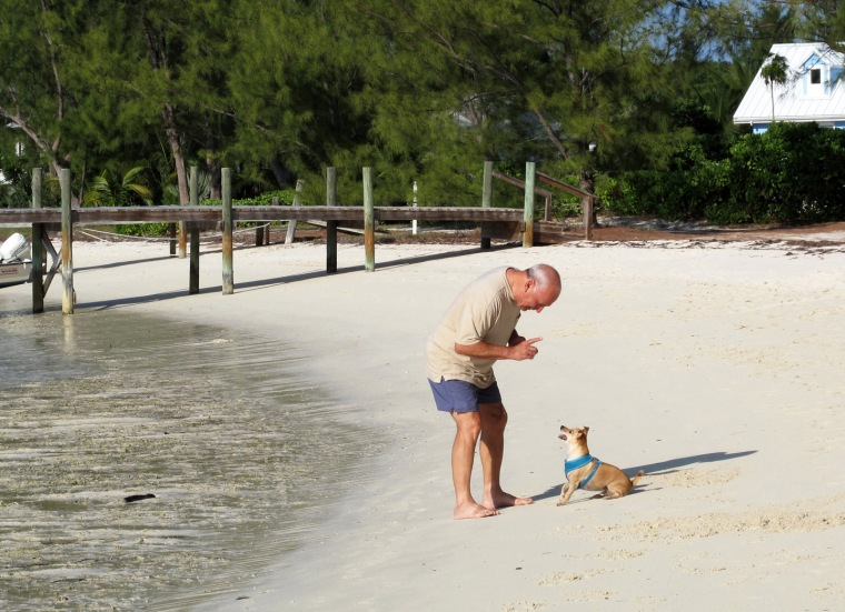 bahamas, abaco, green turtle cay, wrigley, coco bay, travel with dog