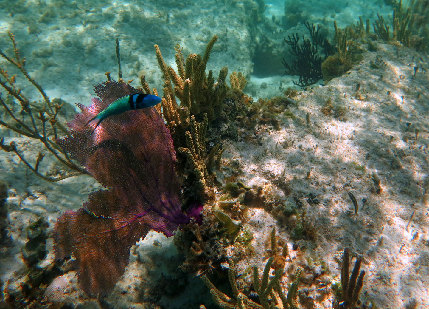 bahamas, abaco, green turtle cay, underwater, fish