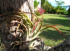 Reduced Garden Pic (4)