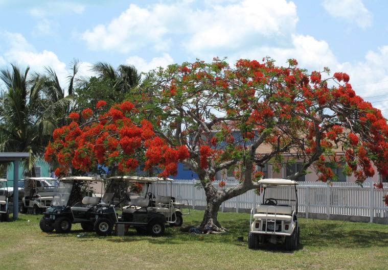 bahamas, abaco, green turtle cay, poinciana, golf cart