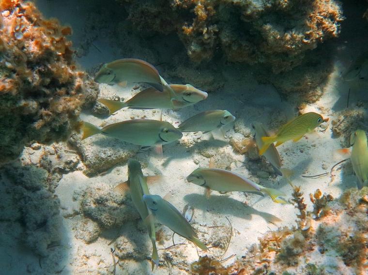 Fish at Bita Bay Reef, Green Turtle Cay