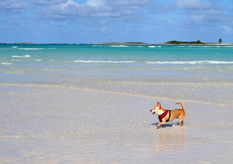 Wrigley at Gillam Bay - Green Turtle Cay
