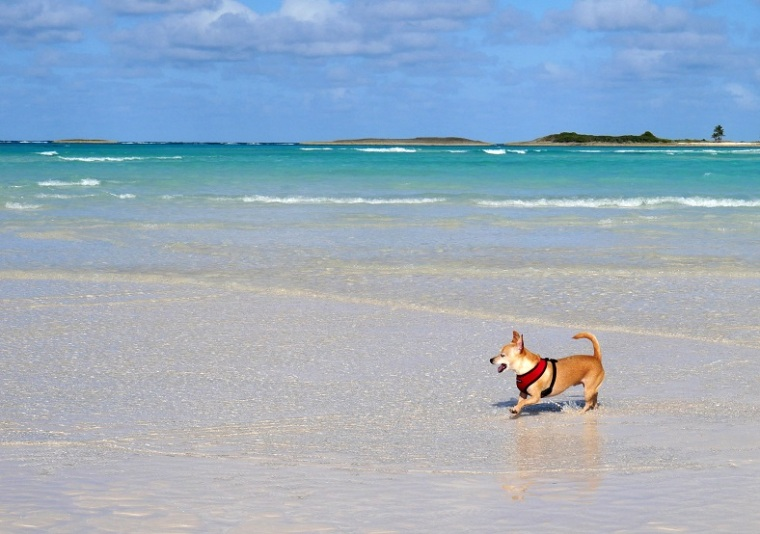 Wrigley at Gillam Bay - Green Turtle Cay