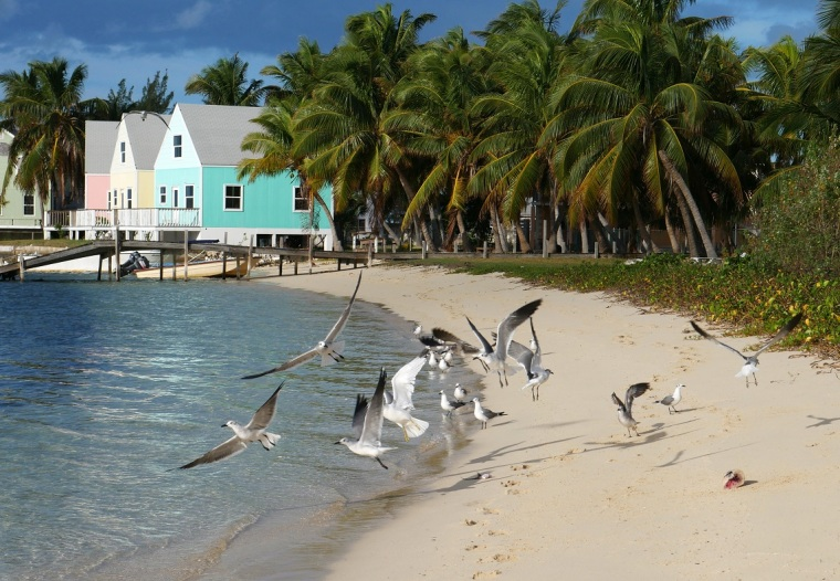Seagulls - Green Turtle Cay, Abaco, Bahamas
