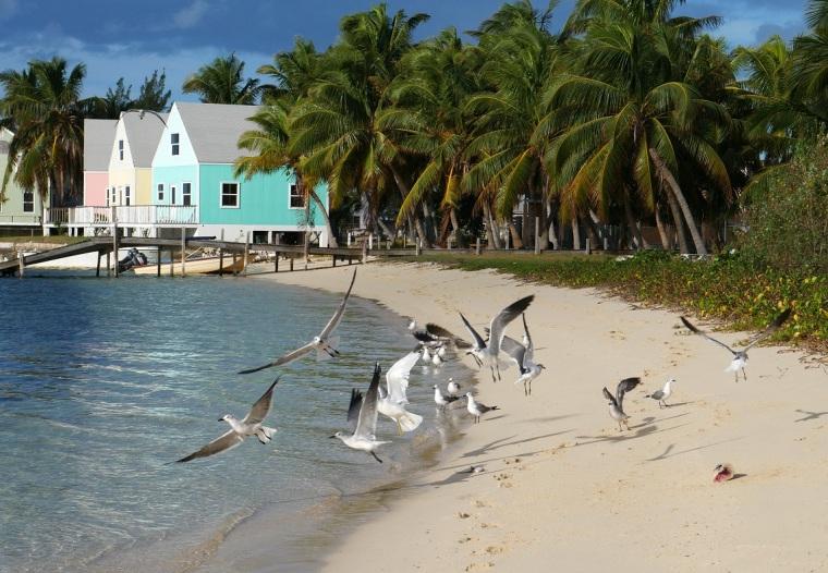 Seagulls - Green Turtle Cay, Abaco, Bahamas