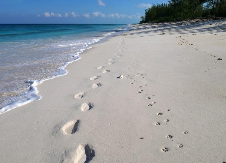 Walking with Wrigley along the Ocean Beach