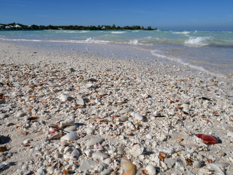 Seashells on Gillam Bay Beach - Green Turtle Cay, Bahamas