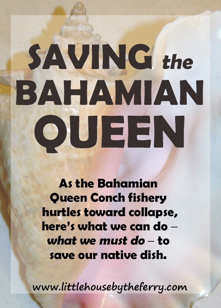 What we must do to save the Bahamian Queen Conch population.