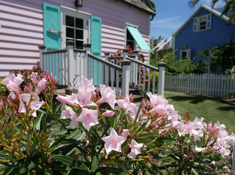 Pink Oleander - Hope Town, Abaco, Bahamas