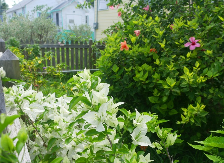 Flowers at the Kendrick House - Green Turtle Cay, Bahamas