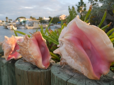 Conch at Dock