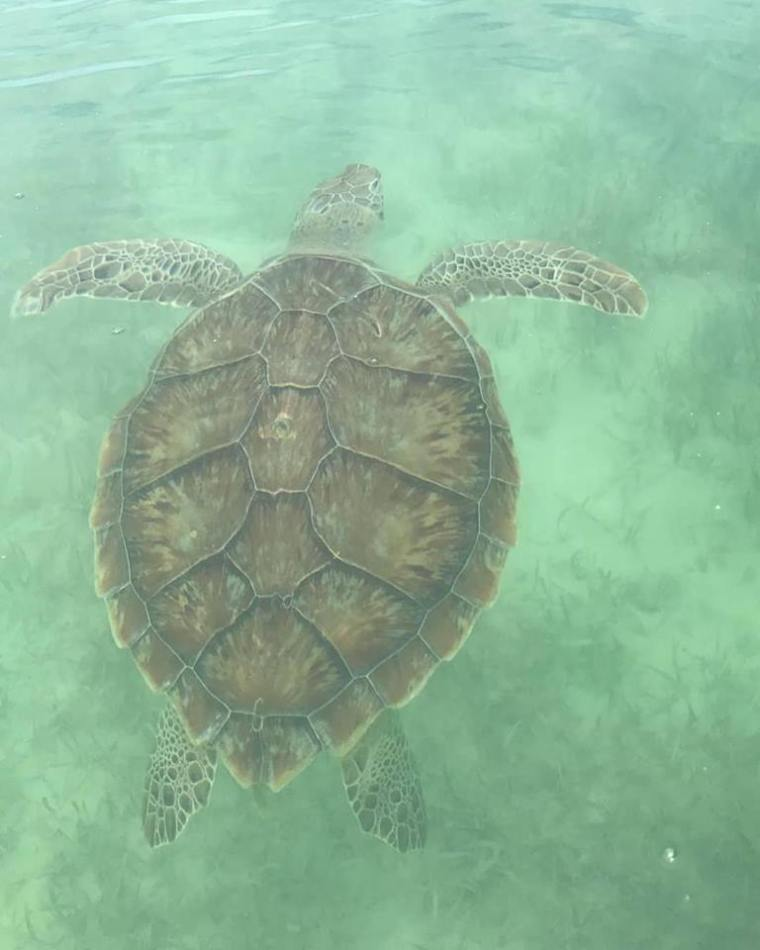 Green Turtle - Green Turtle Cay, Abaco, Bahamas